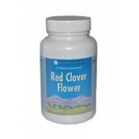 Цветки красного клевера / Red clover flowers
